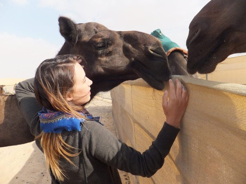 camel-farming-3